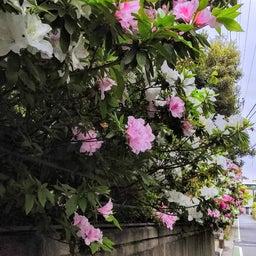 画像 鎌倉の春 の記事より