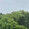 雨と緑の新緑の季節を感じる。の画像
