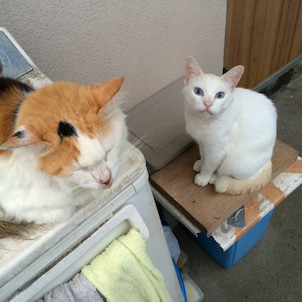 SOS!猫11匹・その3いなくなった猫たちの画像
