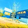 IKEAに行ってきたの画像