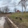 門別競馬開幕。肌寒さが残るも穏やかな時間が流れる牧場の画像