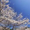 【神人靈媒日記 2021.4.15】霊人Hさんとの対話