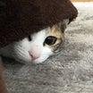 地域猫レスキュー❣️あかり&さつき正式譲渡(*´▽`*)