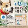 4月18日 もりやまお見合い会の参加犬が決定致しました!の画像