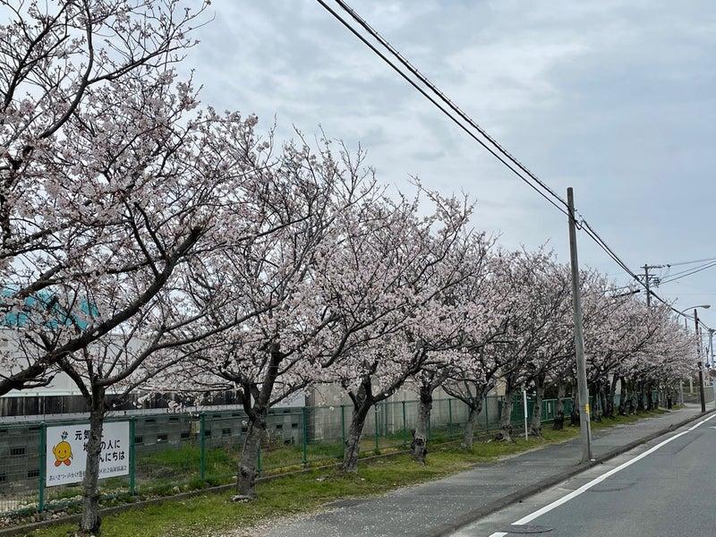 2021年桜