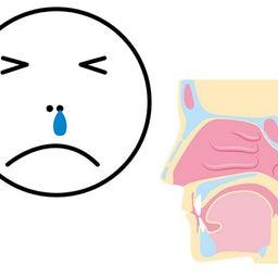 鼻の防御力・自然治癒力