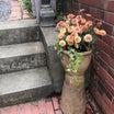 マーガレットの寄せ植えと庭入り口の様子