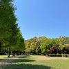 公園が気持ちいいの画像