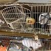 緊急。動物虐待、至急助けて下さい!(拡散願い)の画像