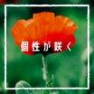 【個性】という花を咲かせたい