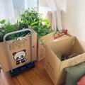 【家】植物で大7箱