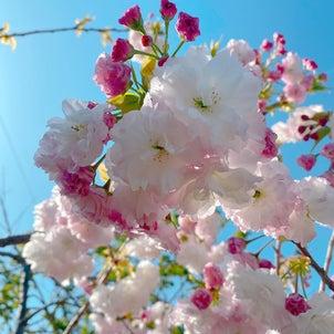桜の寿ぎ 発送準備の画像