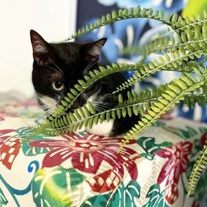 我が家の猫たちアメリカへ・・・の画像