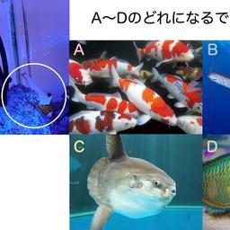 画像 突然ですが、お魚クイズ の記事より
