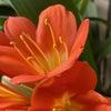 花も実も楽しめる季節の画像