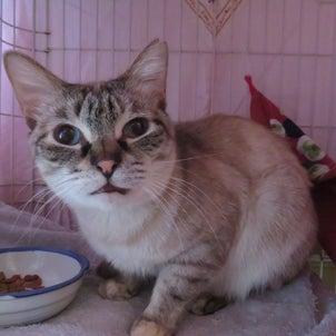 SOS!猫11匹・その5獣医さんに感謝!の画像