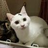 5月9日参加ねこちゃんのご紹介 タマくんと雫ちゃんの画像