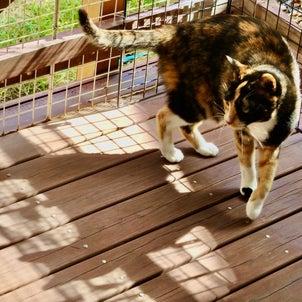 三毛猫ミミ日記〜今日も日向ぼっこを楽しみましたにゃん♪の画像