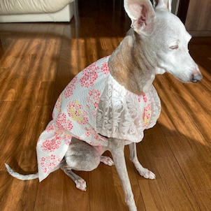 cherry blossom・リップルワンピース  サチちゃんの画像