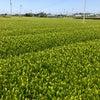 牧之原市茶工場周り 島田市経済界の皆様へリニアの話の画像