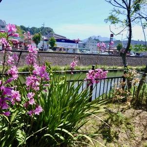 甲突川沿い*玉江公園近くからの眺め*2021年4月20日「穀雨」の青空の画像