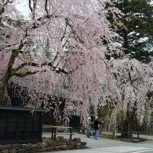 東北の桜その2 角館編の画像
