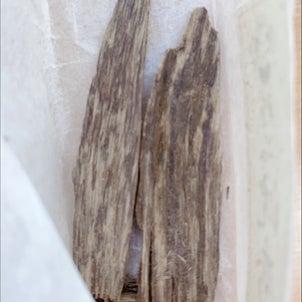 沈香と白檀✨の画像