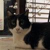 さくら猫@猫萌え・その58の画像