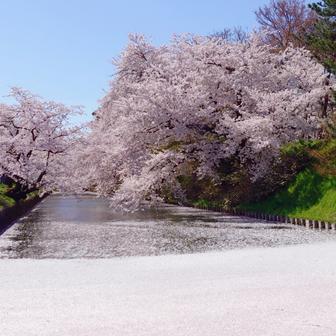 弘前公園 桜堪能