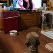 生れて初めてテレビを見たワンコ