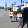 お散歩&シーツブランコの画像