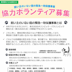 東京都・猫の一時保護ボランティア募集の画像