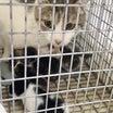 捕獲器のなかで出産した猫・・・