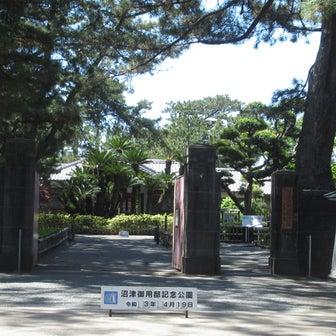 沼津御用邸記念公園に咲くナンジャモンジャ