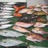 4月22日の釣果の画像