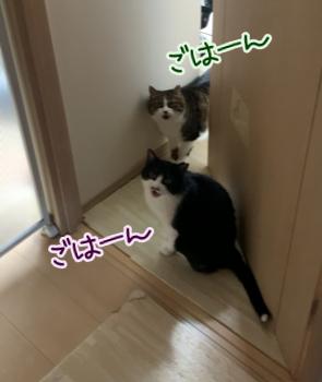 ニャーニャー鳴く猫のリンちゃんとしっぽちゃんの画像