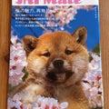 JAF mate  4月号の表紙