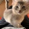 ソマリ~ズ、かわいい顔して悪行三昧♡の画像