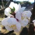 梅も咲き始めました☆