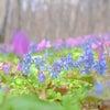 春の森にの画像