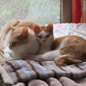 SOS!猫11匹・その7飼い主様募集中の画像