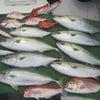 4月24日の釣果の画像