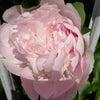 「今日は植物学の日」あなたの好きな花は○○を表している!&お知らせの画像