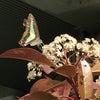 5/25【無料Live配信】ミドルのための「自己肯定感の高め方」の画像