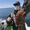 4/26(月)アジ+カサゴ写真追加! 貸切船釣果情報の画像