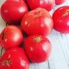 毎年恒例 完熟トマト詰め放題製の画像
