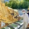 名古屋城の金シャチにタッチ!の画像