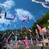 鯉のぼり♡5月店休日♡GWの営業の画像