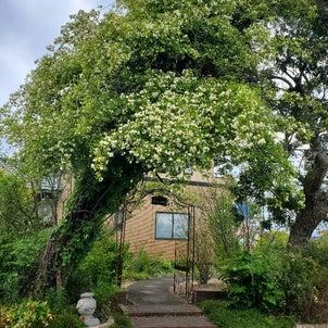 四季の庭 4月の画像