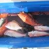 4月27日の釣果の画像